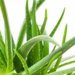 Acid Reflux and Aloe Vera